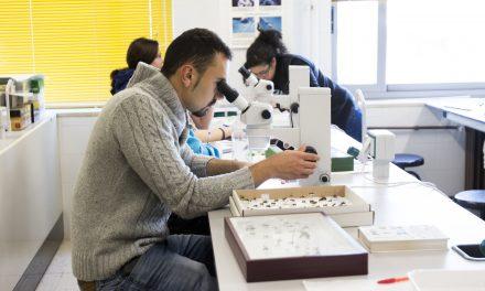 OFERTA – Técnico de desarrollo Galénico
